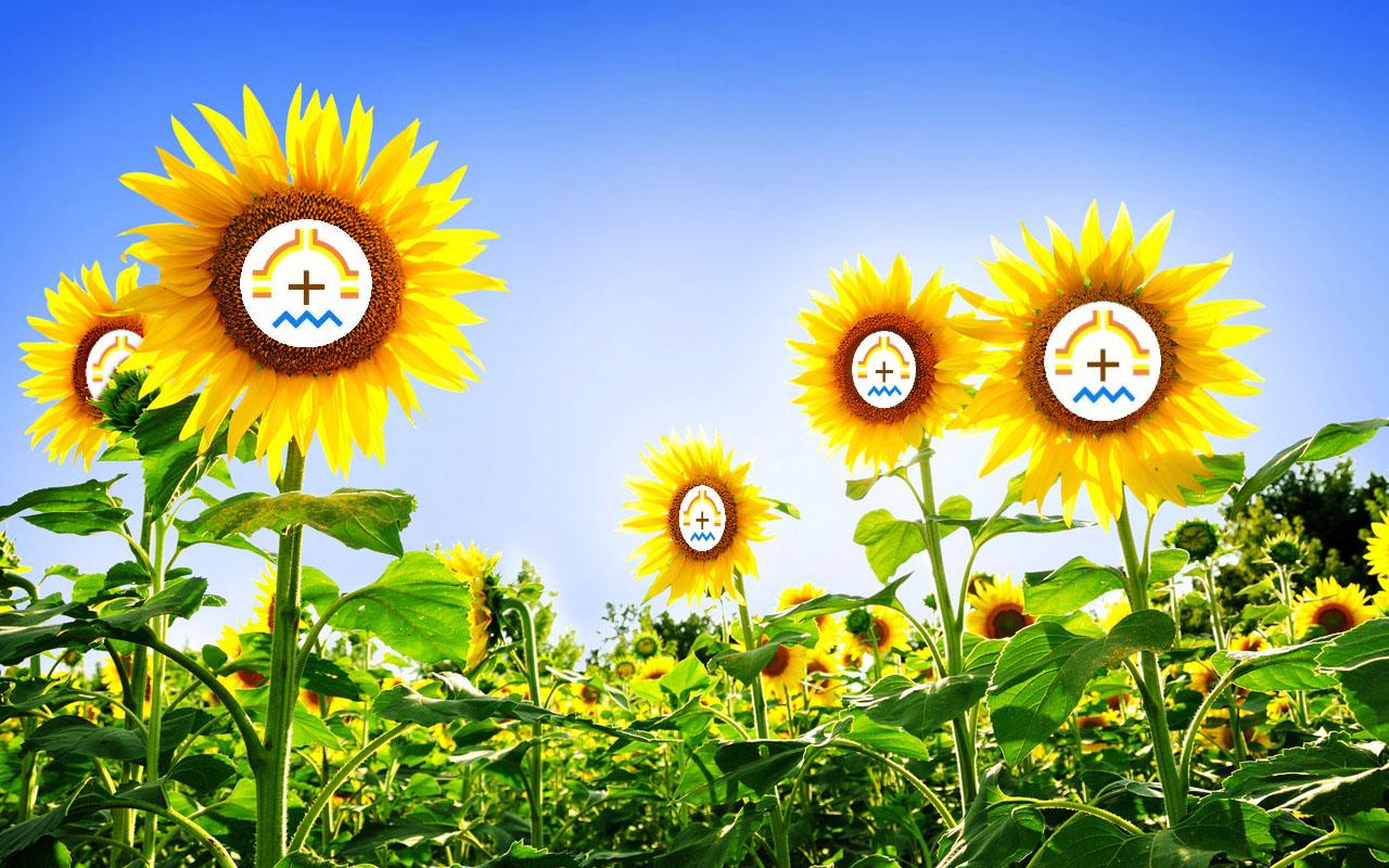 Symbology Of Sunflowers The Sunflower Shrine